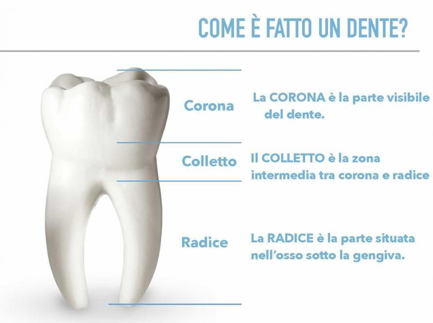 Come è fatto un dente?