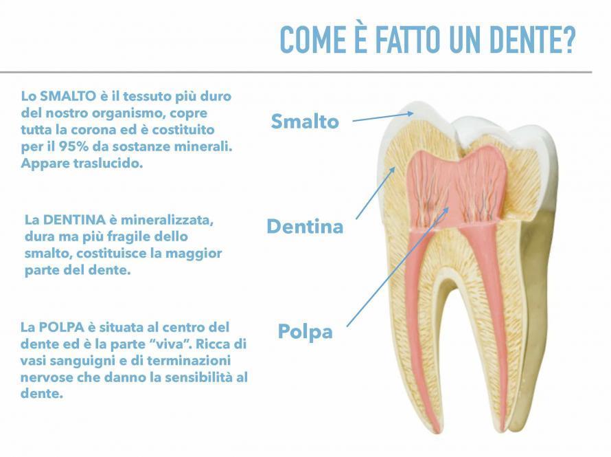 Come è fatto un dente?